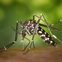 Basta zanzare in giardino