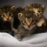 Malattie del gatto, quali sono le più pericolose?