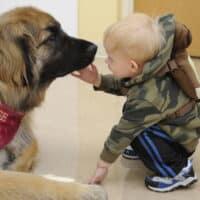 Pet therapy: cos'è, come funziona e quali sono gli animali più adatti