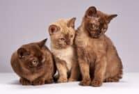 Attenzione alle piante pericolose per i nostri gatti