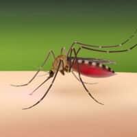 Come evitare le punture di zanzare