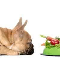 Il cane può essere adeguatamente nutrito con una dieta rigorosamente vegana?